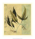 Tropical Fern VI Premium Giclee Print