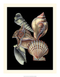 Treasures of the Sea I Prints by Pierre-Joseph Redout&#233;