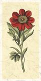 Embellished Blooming Peonies II Giclee Print by Besler Basilius