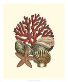 Coral Medley I Prints