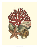 Coral Medley I Giclee Print by  Vision Studio