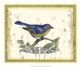 Bird & Wildflowers II Premium Giclee Print by Jennifer Goldberger