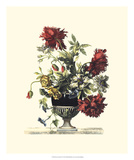 Flowers for June II Prints by Giovanni Baptiste