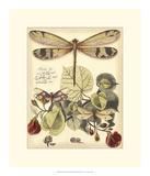 Whimsical Dragonflies II Digitálně vytištěná reprodukce