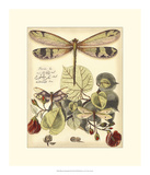 Whimsical Dragonflies II Giclee Print by  Vision Studio