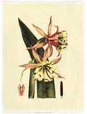Crackled Striking Beauty I Giclee Print