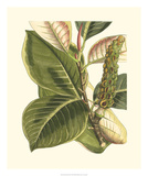 Fantastical Botanical IV Giclee Print