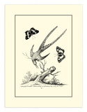 Longtailed Hummingbird , c.1742 Prints by George Edwards