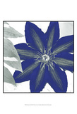 Indigo Star III Prints by Sharon Chandler