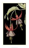 Graphic Fuchsia V Giclee Print by Jennifer Goldberger