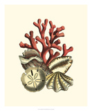 Coral Medley II Print
