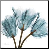 Tulips in Blue Druck aufgezogen auf Holzplatte von Albert Koetsier