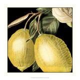 Dramatic Lemon Giclee Print by  Vision Studio