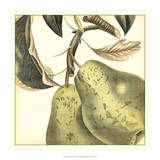 Graphic Pear Giclee Print by Vision Studio