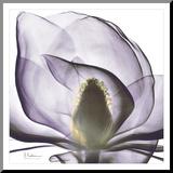 Precious Orchid in Purple Close Druck aufgezogen auf Holzplatte von Albert Koetsier