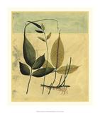 Tropical Fern IV Premium Giclee Print