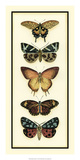 Butterfly Collector V Prints by Chariklia Zarris