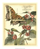 Whimsical Butterflies II Print