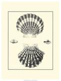 Studies in Symmetry IV Prints by M. Knorr