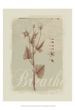 Botanical Respite II Prints by Ken Hurd