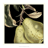 Dramatic Pear Giclee Print by  Vision Studio