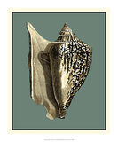 Ocean's Treasure VI Giclee Print by  Vision Studio