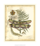 Regal Dragonfly IV Giclee Print by  Vision Studio