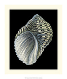 Treasures of the Sea III Prints by Pierre-Joseph Redouté
