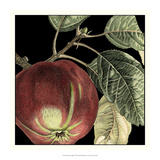 Dramatic Apple Giclee Print by  Vision Studio