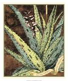 Graphic Aloe IV Giclee Print
