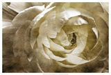 Elegant Peony III Kunstdrucke von Christine Zalewski