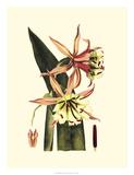 Striking Beauty I Giclee Print