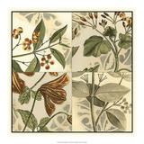 Botanical Quadrant II Giclee Print
