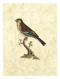 Selby Birds IV Giclee Print by John Selby
