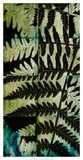 Midnight Ferns II Print by  Vision Studio