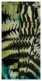 Midnight Ferns II Print by  Vision Studio