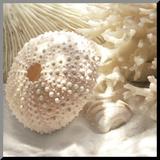 Koraal schelp I Kunstdruk geperst op hout van Donna Geissler