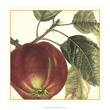 Graphic Apple Giclee Print by  Vision Studio
