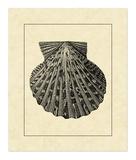 Vintage Shell II Prints