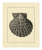Vintage Shell II Giclee Print by  Vision Studio