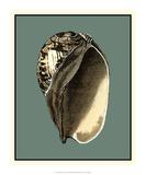 Ocean's Treasure II Giclee Print by  Vision Studio