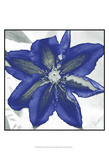 Indigo Star I Prints by Sharon Chandler