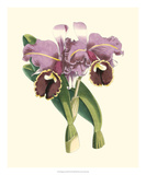 Magnificent Orchid II Giclée-tryk