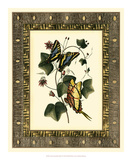 Leather Framed Butterflies II Print by Deborah Bookman