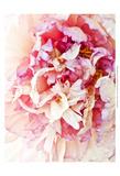 Monet's Peony I Lámina por Rachel Perry