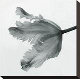 Tulipe perroquet II Toile tendue sur châssis par Tom Artin