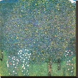 Rosiers sous les Arbres, c.1905 Stretched Canvas Print by Gustav Klimt