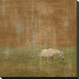 White Horse Stretched Canvas Print by Erin Clark