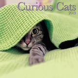Curious Cats - 2013 Wall Calendar Calendars
