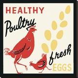 健康な家禽-新鮮な卵 キャンバスプリント